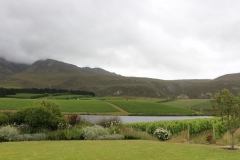 Spring Vineyards at Creation Wine Estate