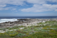 Beautiful views off the ocean and fynbos