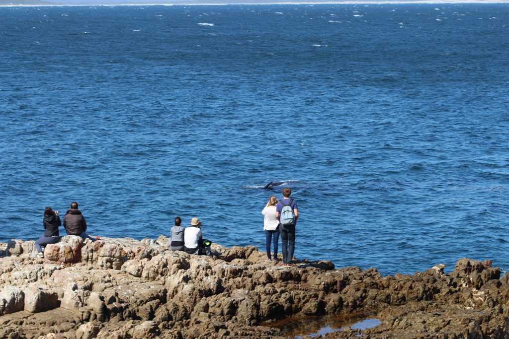 Land Based Whale Watching in Hermanus