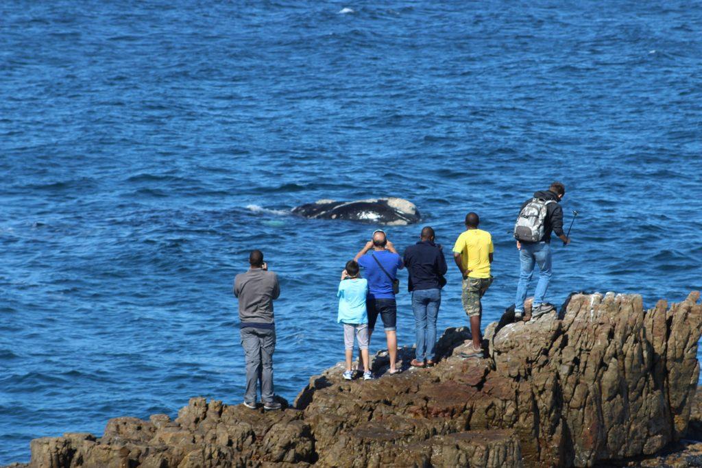 Land Based Whale Watching in Hermanus