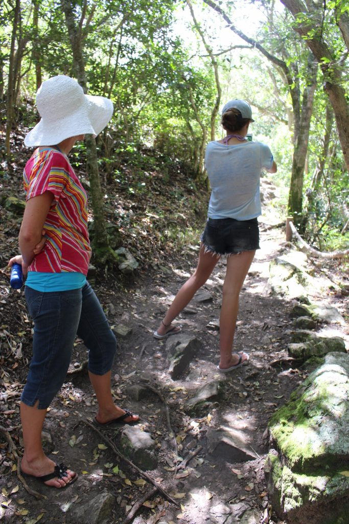 Hiking in Fernkloof Nature Reserve