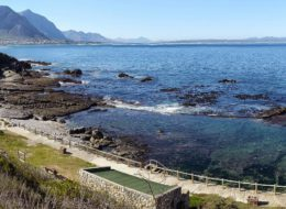The Marine Tidal Pool