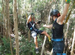 Tree Top Zipling