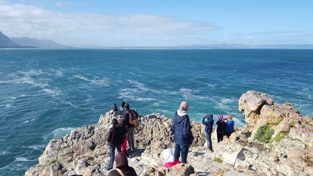 Whale watching at Gearings Point