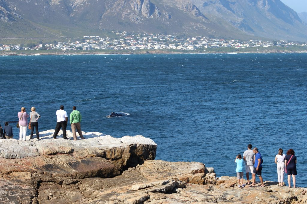 Whale Watching in Walker Bay