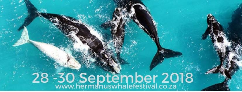 Hermanus Whale Festival 2018